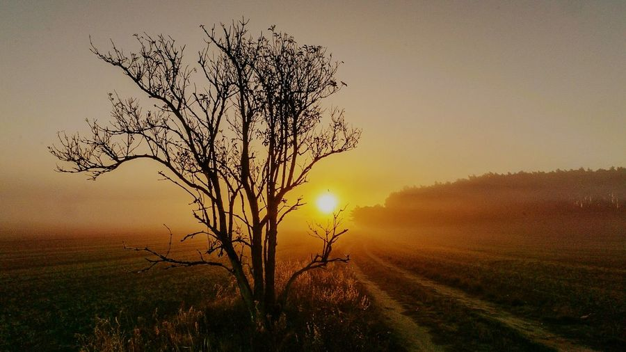 Nature Photography Nature Nature_collection Tree Sunset Rural Scene Dawn Agriculture Fog Silhouette Branch Bare Tree Field Emission Nebula Sun Sunrise
