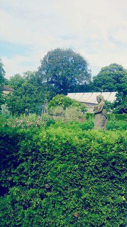 Peeking above the hedge Hedges Baroque Green Green Green!  Statue Botanical Gardens Brunswick Braunschweig Greenhouse Trees
