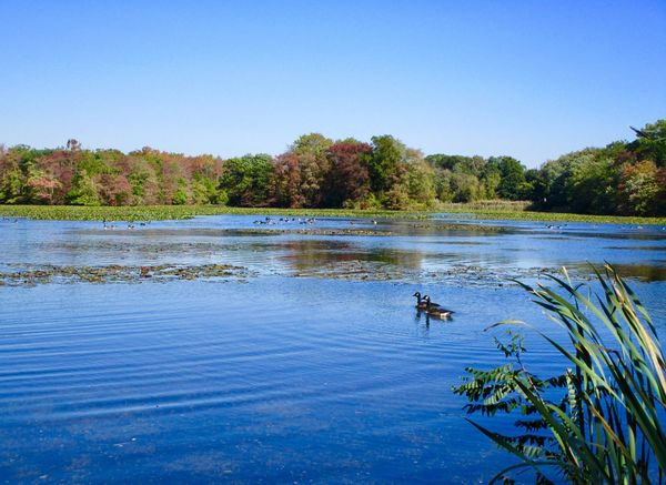 Landscape tranquil scene beauty in nature outdoors blue skies trees autumn colors blue water reflections Water Plant Tree Sky Animal Wildlife Clear Sky No People