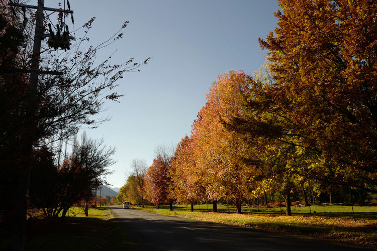 Shot at Bright, Victoria in autumn. Autumn Beauty In Nature Branch Change Clear Sky Day Grass Growth Landscape Leaf Nature No People Outdoors Road Scenics Sky Tranquil Scene Tranquility Tree