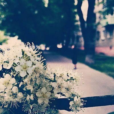 Photo Streetstyle Street Art Paint Green Flowers Blackandwhite Beautiful Nature Tree Spring Home