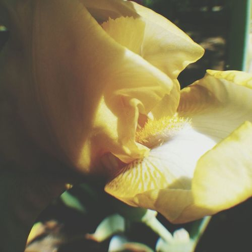 we need more filters like Steph ♡ EyeEm Nature Lover Flowerporn Nature_collection Eye4nature
