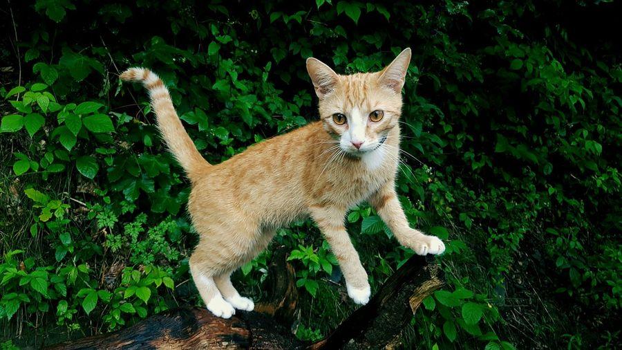 Kitten Standing On Driftwood Against Plants