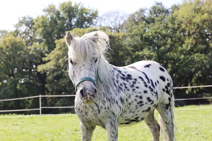 Horse Outdoor Adventures Horse Pony Full Frame Black And White Horse Black And White Animal Animal Themes One Animal Mammal Domestic Animals Animal Wildlife Spotted No People Outdoors Standing Animal Body Part Day Nature Grass Tree Focus On Foreground Pets Vertebrate Plant Domestic