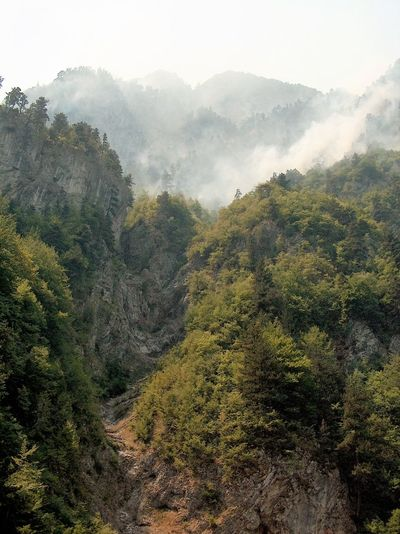 Beauty In Nature Bushfire Day Enormous Fire Forest Geology Green Color Growth Landscape Lush Foliage Mountain Mountain Range Nature Ice Age Non-urban Scene Outdoors Physical Geography Remote Rock Formation Scenics Traveling Tree Trip Photo Valley