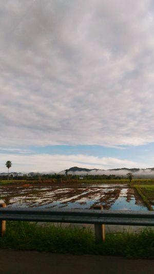 Ricefield View Farmlife Simple Life Foggymorning