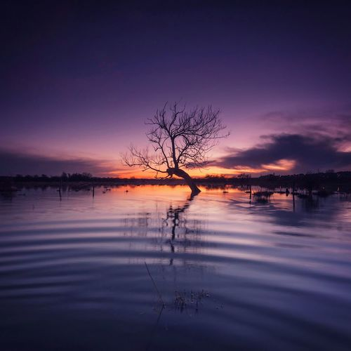 Stranded Lonely Tree Tree Tree Sunset Sunset Dusk Reflections Sunset Reflections Tree Reflection  Tree And Water Water Reflections Waterscape Floodplain Long Exposure Purple Landscape Purple Sky Water Ripples Northamptonshire Irthlingborough Flood Alone Naturelovers Landscape_photography Photography In Motion Landscapes With WhiteWall The Great Outdoors With Adobe The Great Outdoors - 2016 EyeEm Awards