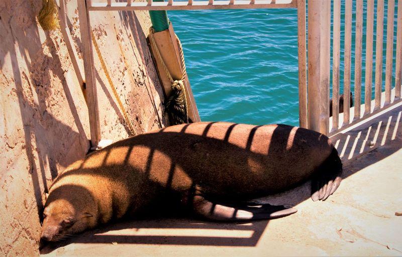 Close-up of sea lion