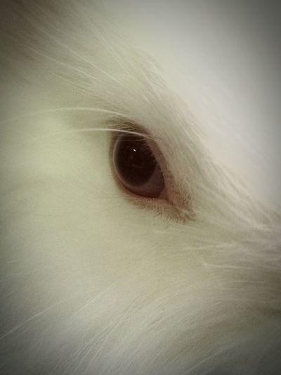 Close up rabbit eye 🐰🐰 Pets Close-up Rabbit 🐇 Pet Animal White Color