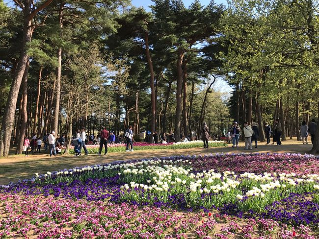 HitachiSeaSidePark Tree Nature Flower Large Group Of People Growth Beauty In Nature Real People Park - Man Made Space Day Outdoors Women Lifestyles Men Freshness Crowd People Adult