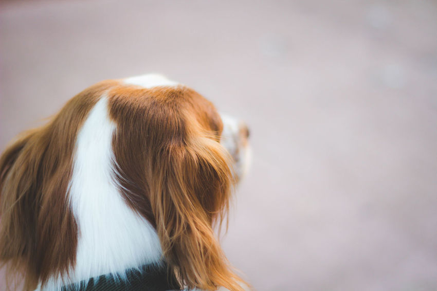 Best friend Animal Body Part Animal Hair Close-up Cute Dog Domestic Animals Nature Outdoors Pets