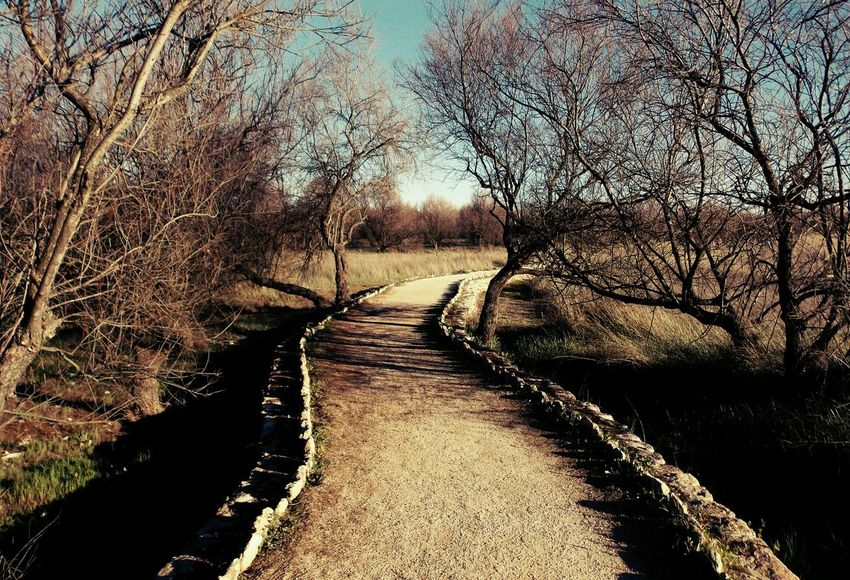 Unique Path Dry Tree Lake Landscape Nature Photography Travel Photography Open Edit Taking Photos Shadows Writing With Light Showcase April