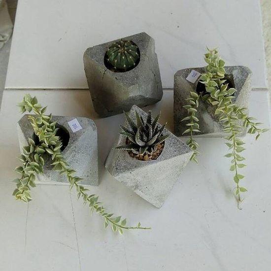 ทรงสามเหลี่ยมเท่ๆ ใส่กับต้นไม้อะไรก็สวย สนใจสั่งได้ครับมีบริการส่งครับกระถาง กระถางกระบองเพชร กระถางปูนเปลือย กระถางปลูกต้นไม้ แต่งบ้าน แต่งสวน Dib_te DIY Design Handmade Loft Livingplants Rustic Cactusclubs Cactuslover Cactusmagazine Cactusthailand Cactusworld Crazycactus Plants Plant Planters Secculent Secculentcafe Sacculent