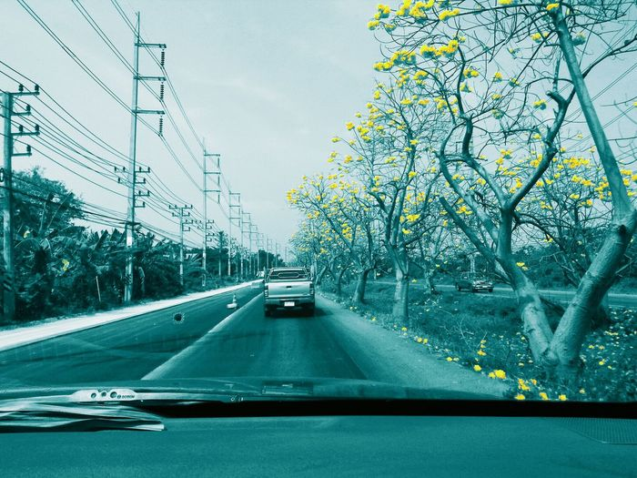 number 33 road in April Thailand. Golden Trumpet Flower Yellow Flower On The Road Car Point Of View Road Trip Travel Street Outdoors In A Car Thailand Road Mode Of Transportation Motion on the move Car Road Tree