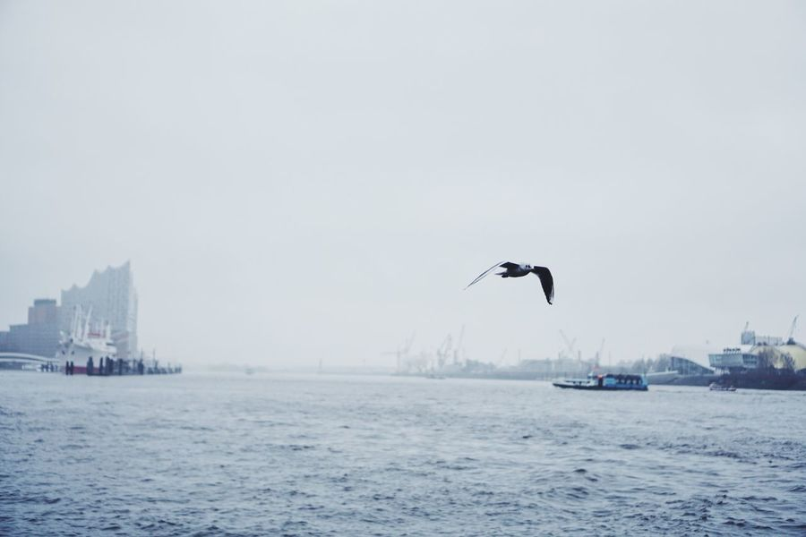 Beauty In Nature Beauty In Ordinary Things City City Life Cityscapes Day Elbe Eyeemoninstagram Hamburg Mid-air Mode Of Transport Nature No People Outdoors Sea Seagull Silience Sky The Great Outdoors - 2016 EyeEm Awards VSCO Water Waterfront