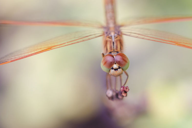 Close-up Selective Focus One Animal Focus On Foreground Invertebrate Insect Animal Themes Day Animal No People Plant Nature Animal Wildlife Beauty In Nature Vulnerability  Fragility Outdoors Growth Dragonfly