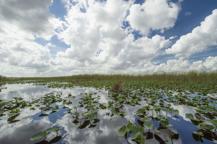 Cloud - Sky Sky Beauty In Nature Tranquility Tranquil Scene Water Plant Nature Scenics - Nature Growth Day No People Landscape Environment Floating On Water Outdoors Real People