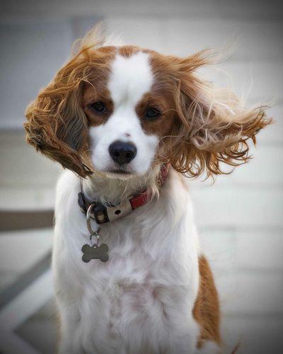 Windy ears ! Barney The Dog pooch