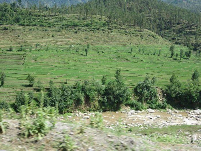 Fields Village