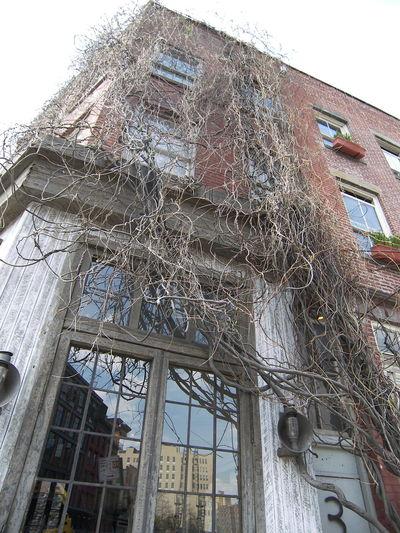 Building Ivy
