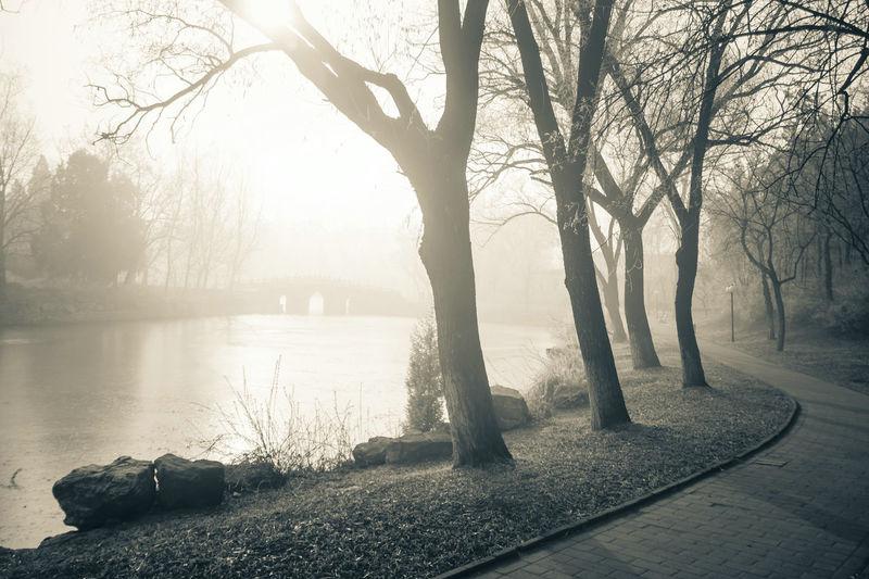 Tree Water Fog City Winter Cold Temperature Branch Lake Sunlight Bare Tree