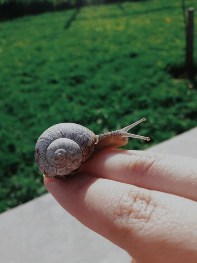 Cropped hand of person holding snail