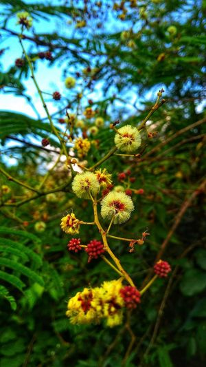 Close-up of flowering plants on tree