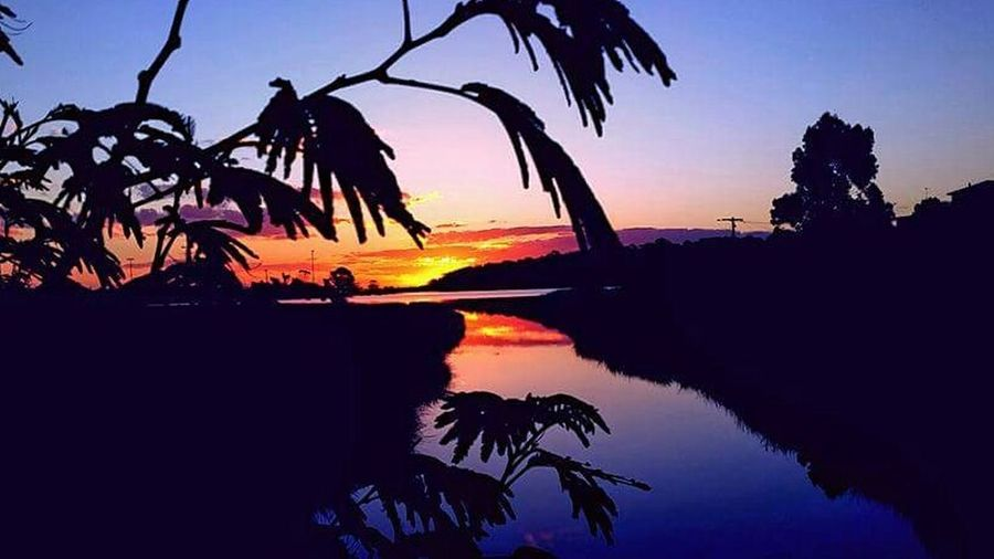 Reflection Sunset Water Tree Sky Palm Tree Nature Outdoors No People Sea lake shillouete multi-colour colourfull Australian-sunset Australia tranquility tranquil lake Waterfront Lake Reflection Travel Destinations Dramatic Sky Cloud - Sky Sun Nature Colourful-sky Colourful Colour Tranquil Scene Tranquility Beauty In Nature Beach Scenics Day Uniqueness