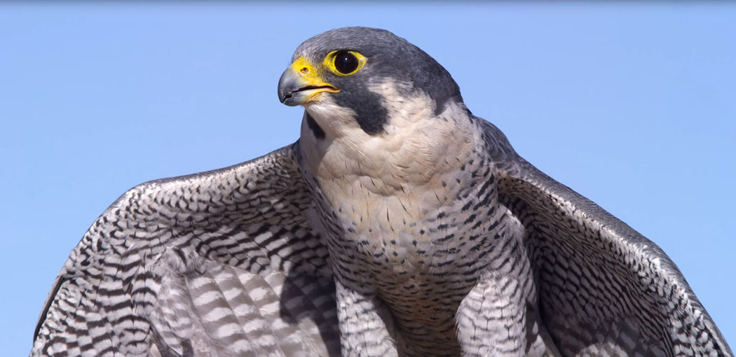 Close-up of a bird against clear sky