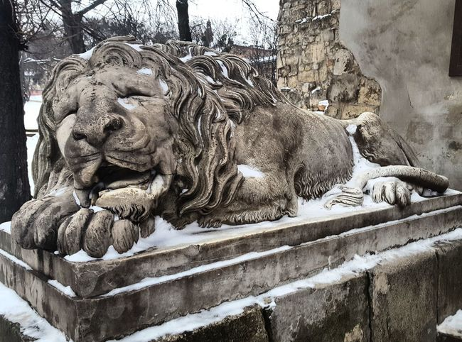 Lviv, Ukraine Lviv Winter Lions Of Lviv Lionsculpture Snow ❄ Beauty In Ordinary Things Sleeping Lion Lvivforyou Lvivdetails Lviv💝 BYOPaper!