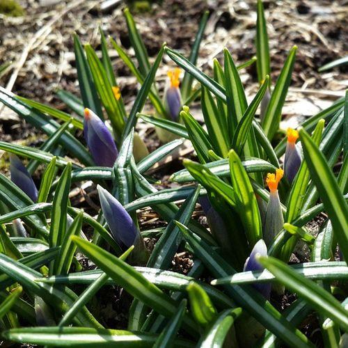 веснакрасота