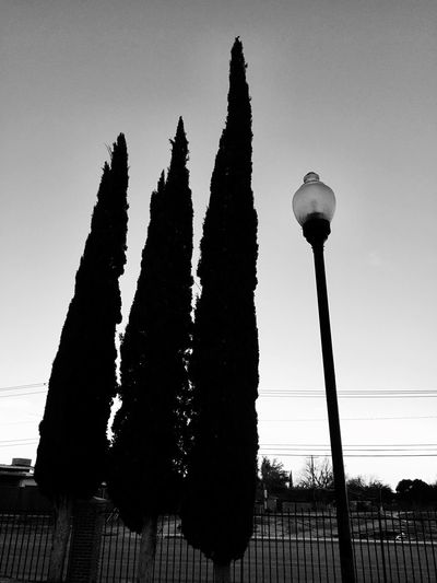 Low Angle View Sky No People Outdoors Nature Day Monochrome Photography Urban Lifestyle Adapted To The City Lamp Post Three Trees Adapted To City
