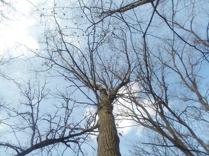 Tree Branch Bare Tree Sky