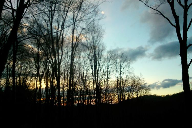 Forest Evening Sky wood shapes Landscape Three