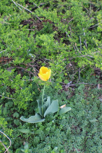 Yellow Flower No People Outdoors