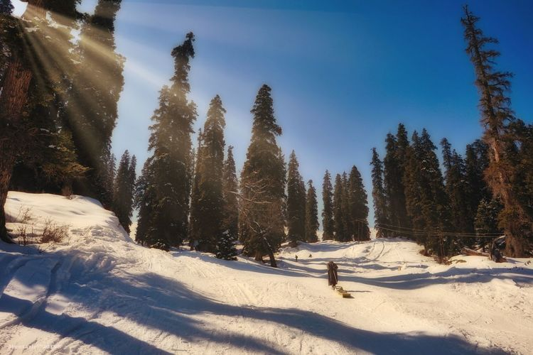 Morning in Gulmarg Atmospher Globalcapture Earthfocus Big_shotz Ourplanetdaily Nature Natgeo Irantravel Uncoveriran Untoldiran Tourism_iran River Discoverearth Clouds Igglobalclub Travel_iran Repost Colorful Iran Iran_travel IranNature چهارمحال Travel Traveltoiran Iranshots Akas_khoone Bounpanvether Kashmir Landscapephotography Sonyimagesffa2 Photographylife Storiesofindia Photographers Worldbestshot Visualsoflife Indianpictures Photography Visualambassadors Landscapephotographymagazine India Allshots Ftwotw Kashmirdiaries Sony Earthexperience Travelstoke Ski Holiday Sky Forest Landscape Day Pine Tree Beauty In Nature No People Outdoors Pinaceae Tranquility Vacations Scenics