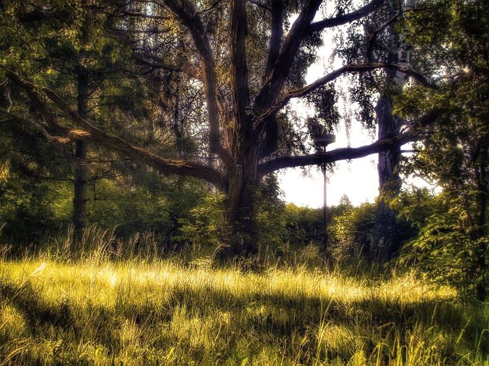 Tree Field Sky
