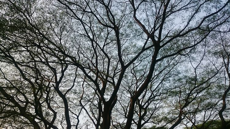 Nature Photography Trees Branches Silhoutte Photography Sky Nature's Diversities