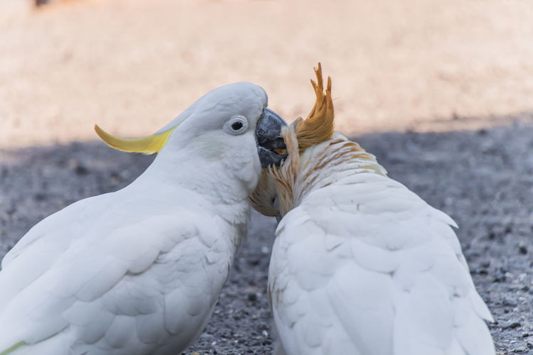 Close-up of two birds on land