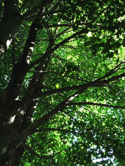 Under a tree at the campground 👍 POV Of Dee Nature Tree Leaves