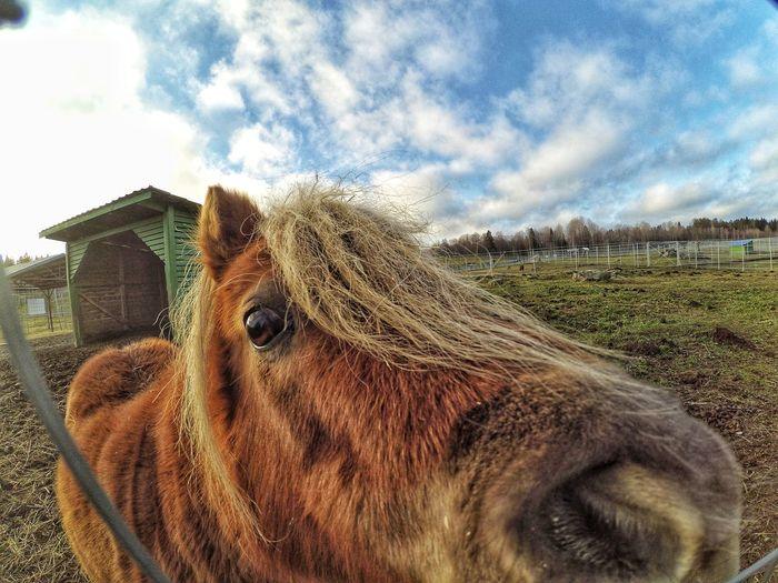 like Pony Cute