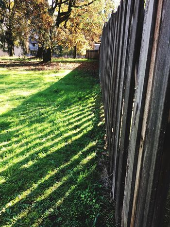 Fence Shadow Fence Shadow Angles Autumn Pacific Northwest  Oregon Beauty In Nature Outdoors