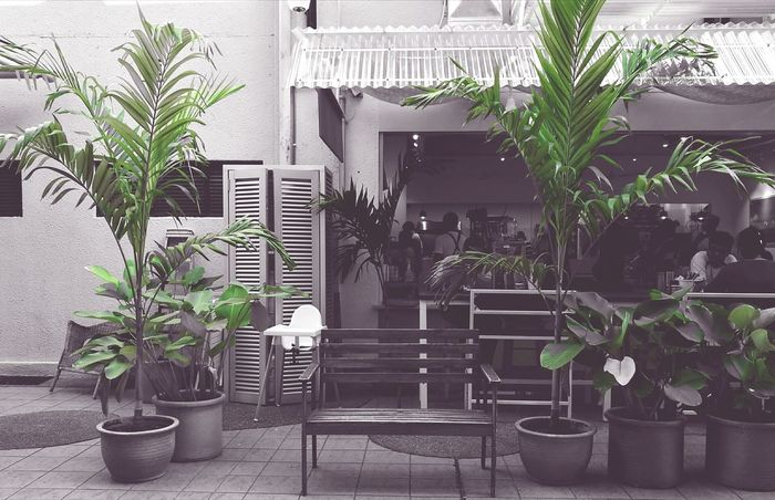 Plant Potted Plant No People Chair Leaf Nature Tree Day Bench Green Green Color Outdoors Contrast Contrasting Colors Simple Photography Simplistic Shot Simplistic Colour Splash Coloursplash