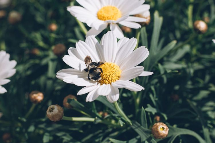 Bee Flower Flowering Plant Invertebrate Plant Freshness Growth Insect Animals In The Wild Petal Beauty In Nature Animal Wildlife Animal Themes Close-up Animal One Animal Flower Head