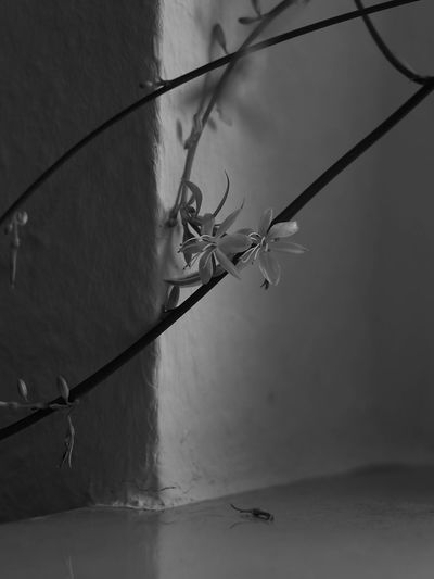 Flowers Room Plant B&w Closeup Reflections Water Fishing Tackle Insect Fishing Net Trapped Spider Web Mosquito Animal Themes Close-up