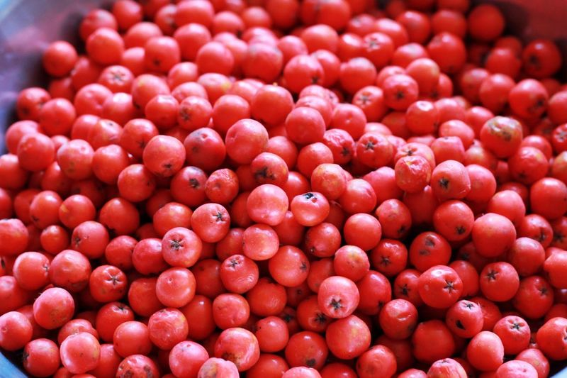 Full frame shot of rowanberry