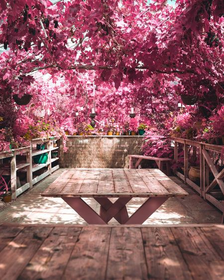 Pink cherry blossoms in park