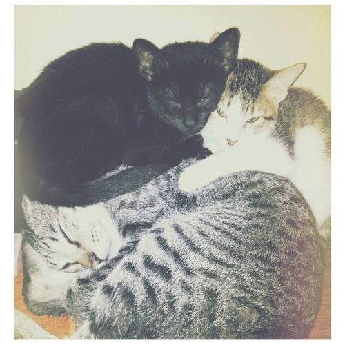 Good MEOWning :3.. nilalamig sila hehe! Happy New Year 2015 Cats Cute Cats (>^ω^<)