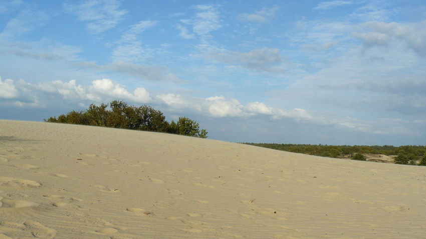 Sand Dune Tree Beach Sea Sand Blue Summer Water Desert Sky