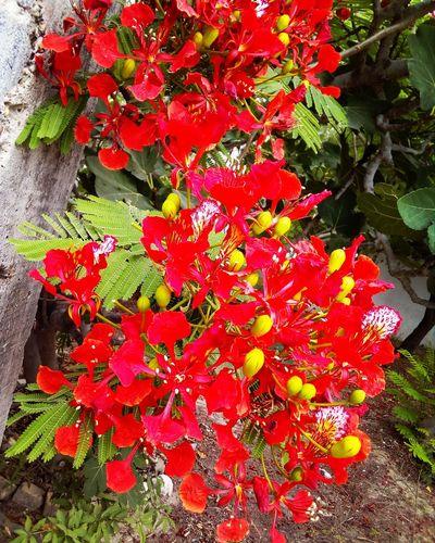 Rojos Flores